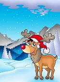 pic of cariboo  - Christmas theme with cute reindeer  - JPG