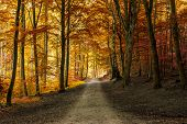 Постер, плакат: Autumn Fall Forest With Pathway