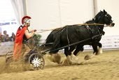 picture of chariot  - chariot with driver in roman costume and two shire horses on fiera cavalli verona some motion blur - JPG