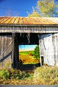 foto of mennonite  - looking through an abandoned dairy barn we can see what was once a pasture is now used as a soybean field - JPG
