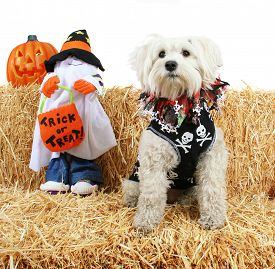 picture of bag-of-dog-food  - a cute terrier with a bandanna on next to a ghost holding a trick or treat bag on a bale of hay or straw halloween theme on an isolated white background  - JPG