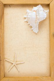 stock photo of conch  - Vintage image of conch shell and starfish on the canvas frame - JPG