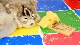 stock photo of mouse trap  - Cat sleeping next to a mouse trap baited with a wedge of cheese on a colourful floor background - JPG