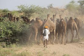 stock photo of camel  - Indian men and camels attended the annual Pushkar Camel Mela - JPG