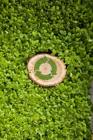 image of disafforestation  - tree stump on the green grass with recycle symbol - JPG