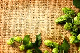 image of brew  - Ingredients for brewing beer - JPG