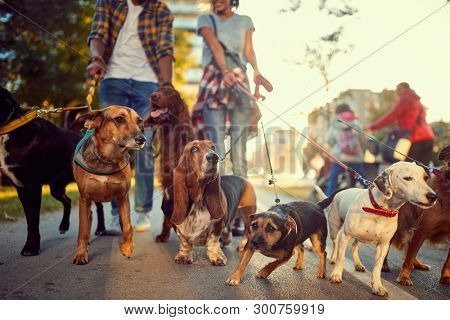 poster of group of dogs in the park walking with professional dog walker