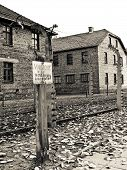 pic of auschwitz  - Auschwitz camp fence in a gloomy autumn