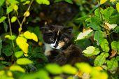 Little Fluffy Homeless Kitten. Small Animal Fluffy Cat poster