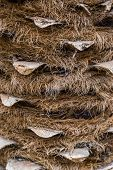Macro Closeup Of A Hairy Palm Tree Trunk, Popular Tropical Tree, Nature Pattern Background poster