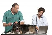 picture of otoscope  - Vets examining a Border Collie with a digital otoscope in front of white background - JPG