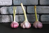 Fresh Garlic. Three Heads Of Garlic On The Table On A Dark Background. Mill Food. Harvest Food Stock poster