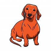 Dog. Orange Dachshund. Hand-drawn Dog. Realistically Painted Dachshund. Transparent Background. Vect poster