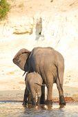 image of veld  - A herd of African elephants  - JPG