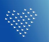 stock photo of geese flying  - White Swans flying or Geese flying or Crane Flying in the shape of heart against a blue sky background - JPG
