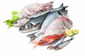 picture of mullet  - Fresh catch of fish and other seafood isolated on white background - JPG