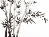 pic of bamboo forest  - traditional Chinese painting bamboo with white and black - JPG