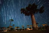 image of baobab  - Baobab alley and starry sky - JPG