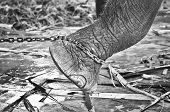 image of big-foot  - Closeup of sad elephant