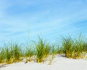 stock photo of dauphin  - grass grows at dune at a beautiful beach on Dauphine Island - JPG