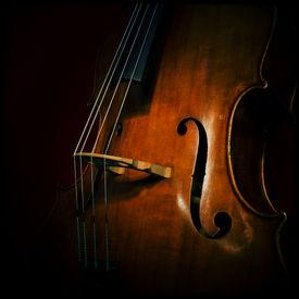 stock photo of string instrument  - Close - JPG