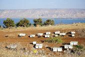 stock photo of beehive  - Beehives on the bank of Kinneret lake Israel  - JPG