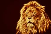 stock photo of lion  - Abstract - JPG