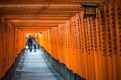 picture of inari  - Red Torii of Fushimi Inari Shrine Kyoto Japan - JPG