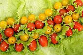 picture of greenery  - Still life from tomato and to different greenery - JPG