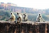 stock photo of foursome  - Monkeys sitting on roadside wall in the vicinity of Jaigarh Palace Jaipur Rajasthan India Asia - JPG
