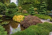 pic of ponds  -  Small quiet pond - JPG