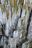 foto of sugar industry  - close up bark of sugar palm tree - JPG
