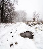 image of icy road  - Winter road through the trees in the snow - JPG