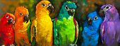 Постер, плакат: Beautiful parrots