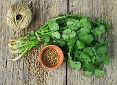 stock photo of cilantro  - Bunch fresh cilantro and coriander seeds on a wooden table - JPG