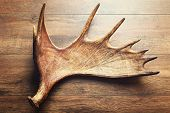 image of antlers  - Moose antler on wooden background - JPG