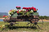 image of petunia  - olorful of petunia flowers on trolley or cart wooden in garden - JPG