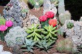 foto of cactus  - Cactus in pot - JPG