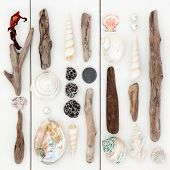 image of driftwood  - Driftwood and sea shell abstract design on wooden white background - JPG