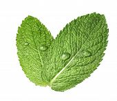 pic of mint leaf  - Mint herb leaves water drops 2 isolated on white background as package design element - JPG