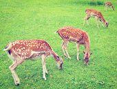 pic of bavaria  - Deers Grazing in the Alpine Meadows of Bavaria Retro Effect - JPG