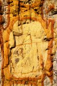 stock photo of lichenes  - texture rock abstract lanzarote spain of a broke stone and lichens - JPG