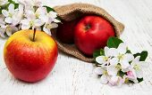 stock photo of apple blossom  - Sack with apples and apple tree blossoms on a wooden table - JPG