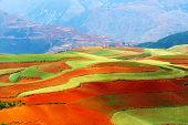 picture of loamy  - Beautiful fields landscapes in Yunnan Province southwest of China - JPG