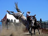 picture of bucking bronco  - a grey bucking horse with his hind legs high in the air as he attempts to dislodge his rider - JPG
