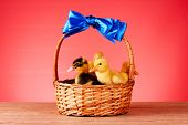 Little yellow fluffy ducklings in basket on red background poster
