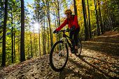 Cycling woman on cycle trail in autumn forest. Mountain biking in autumn landscape forest. Woman cyc poster