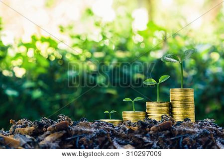 poster of Long-term Investment Or Making Money With The Right Concepts. A Plant Growth On Stack Of Coins On Go