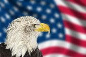 Portrait Of American Bald Eagle Against Usa Flag Stars And Stripes