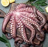 Whole Fresh Raw Octopus On Cutting Board Closeup On Gray Slate Background poster